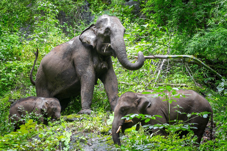 MEET OUR ELEPHANTS, BY REBECCA WINKLER '16